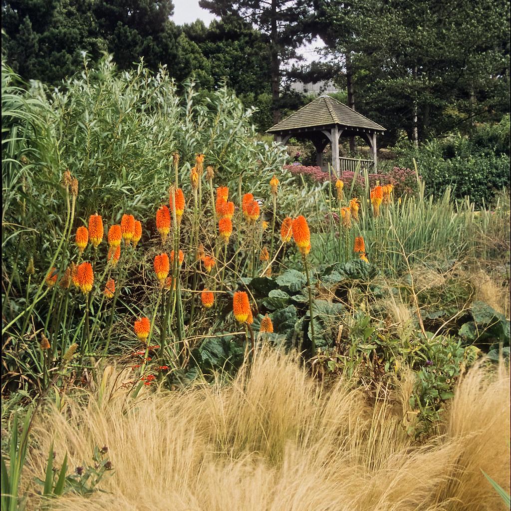 Westbury Gardens Rose Garden: RHS Garden Hyde Hall, Essex, UK