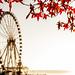 Autumn Wheel