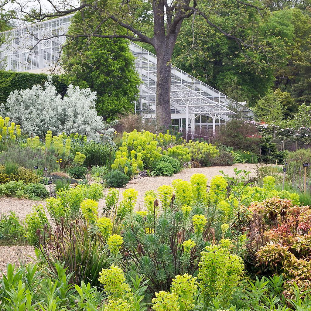 Dry Gardens In England 7 Of 21 Euphorbias In Dry Garde