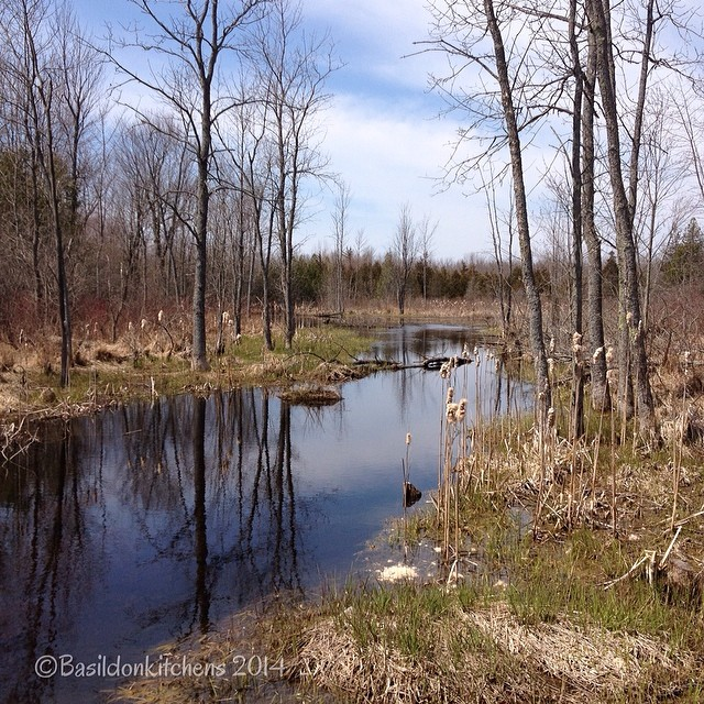 28/2/2014 - reflection {one from the archives. Last spring at the beaver pond} #fmsphotoaday #reflection #oldmilfordroad #milford #princeedwardcounty #spring #beaverpond