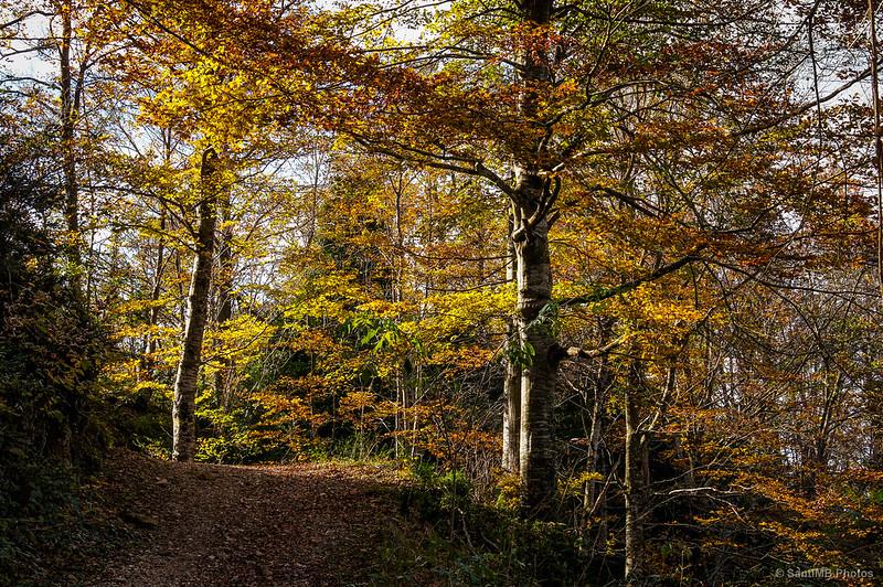 La luz del sol resaltando los colores del otoño de camino a la Grevolosa