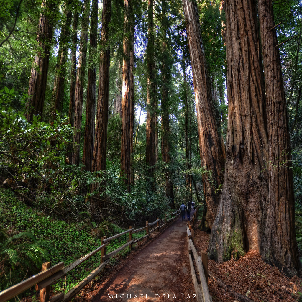muir woods how to get there