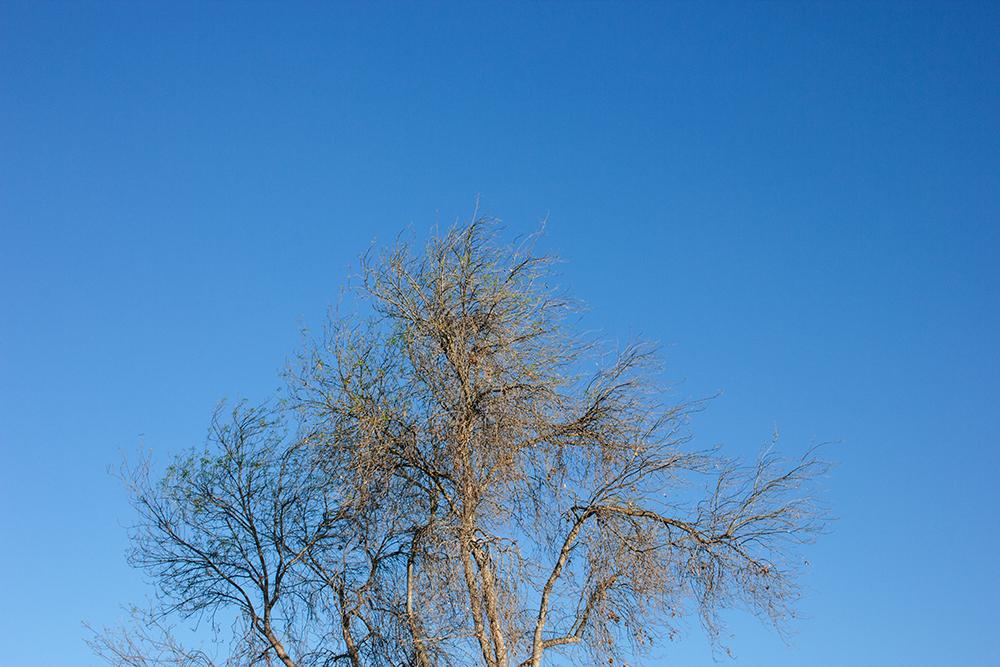 tree_1_web