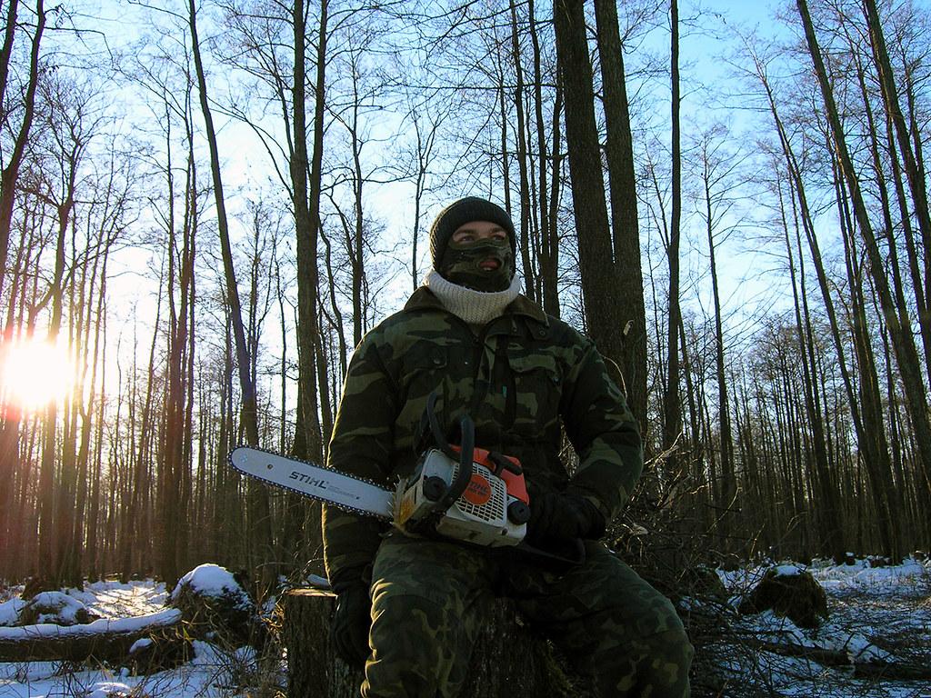 В Славском районе орудуют черные лесорубы