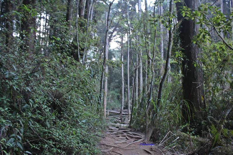 Taiwan Island trips。Couchsurfing。環島景點。南投秘境。忘憂森林。17度C隨拍。  (55)