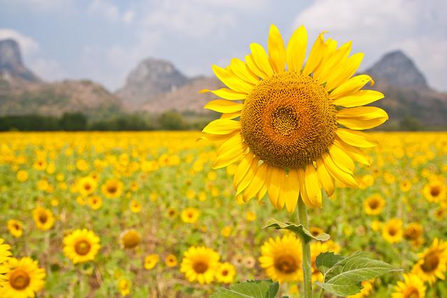 Sunflower Natural Food Store Waterbury