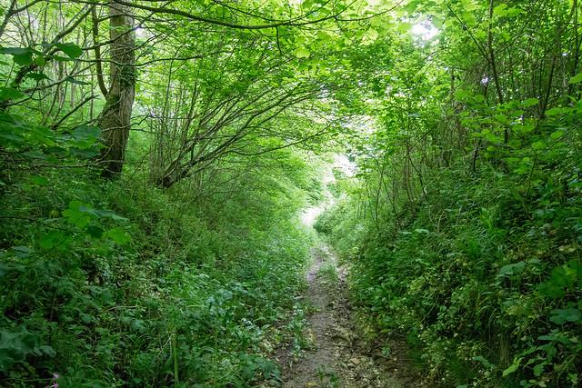 Bridleway to Folly