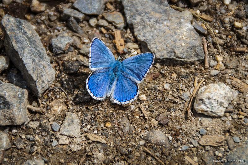 Una mariposa en el camino