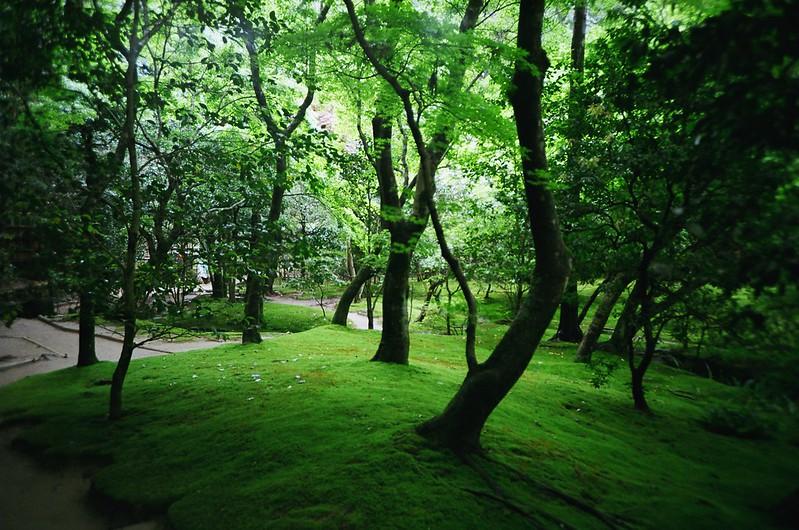 京都:新緑 / 銀閣寺