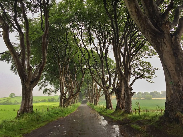 The Dark Hedges (Camino Real en Juego de Tronos, Irlanda del Norte)