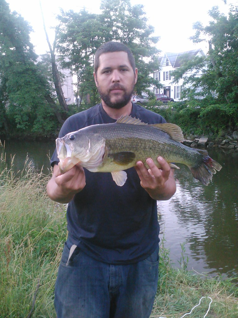 Largemouth bass largemouth bass courtesy of heath for Md dnr fishing report
