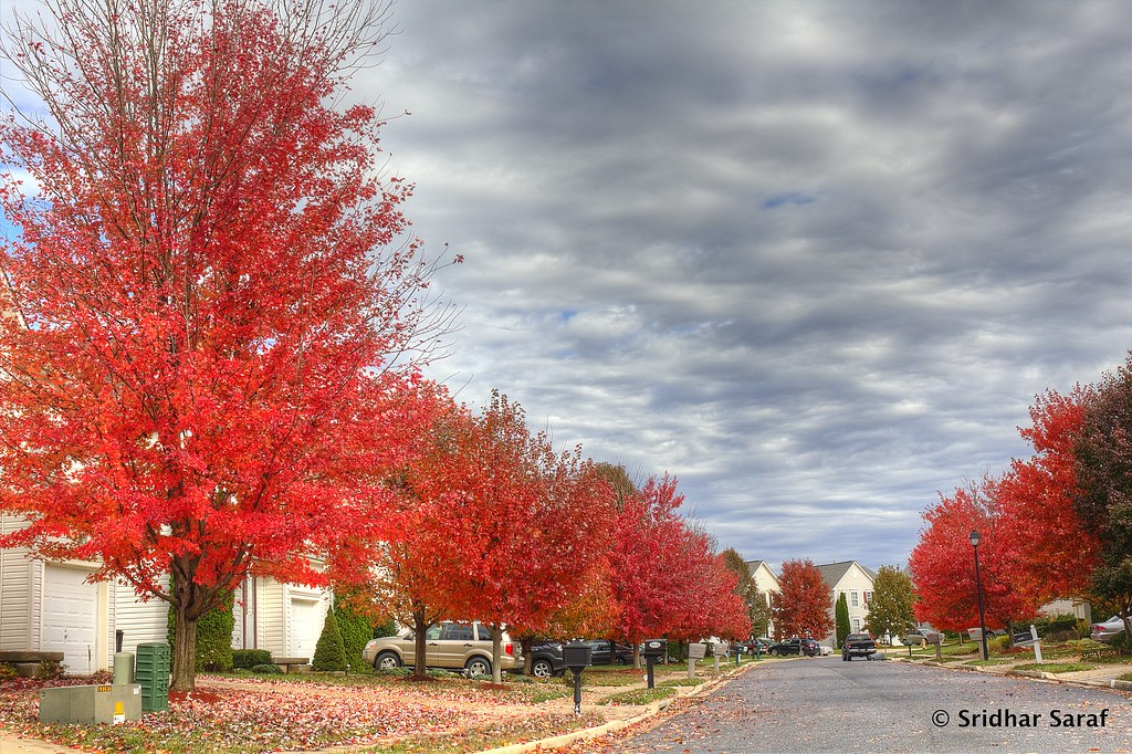 Fall Colors On Endora Court Owings Mills Maryland USA