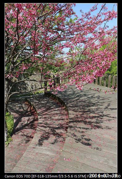 20140228_CherryBlossom3