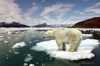 Global Warming Scam or Reality