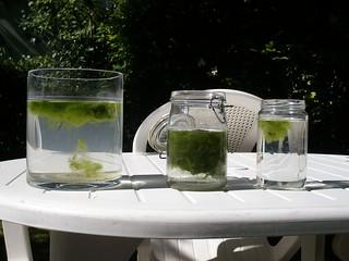 foto 3 le alghe in alto