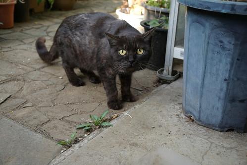 庭の猫(後客)