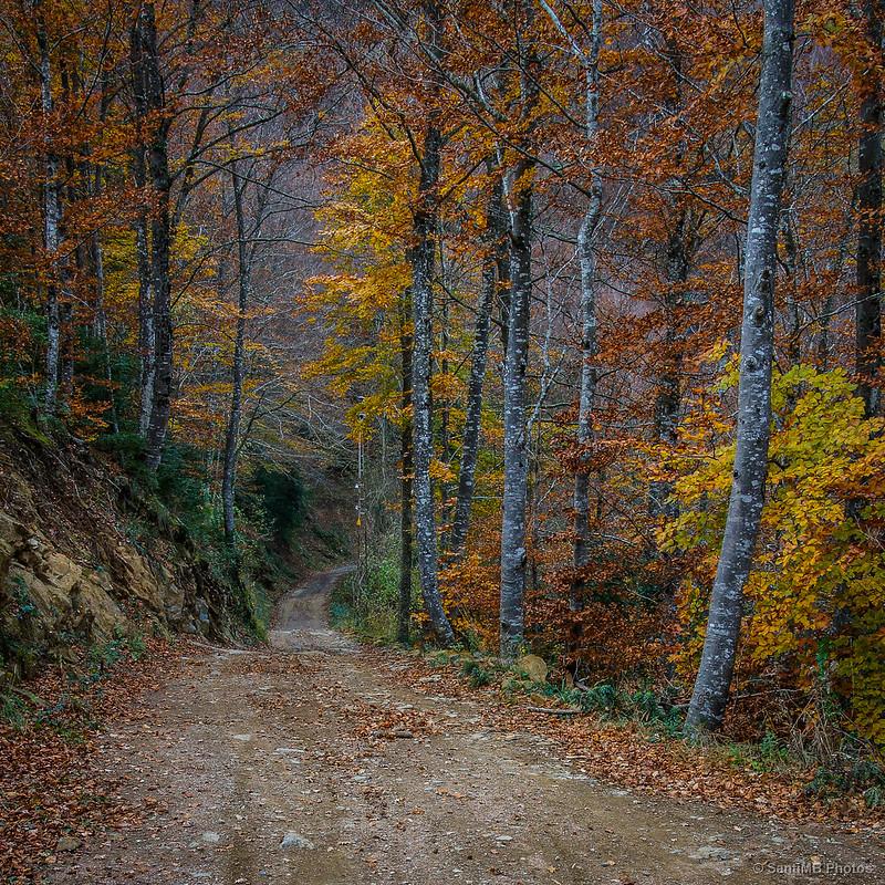 Colores otoñales en el Camino de la Salgueda
