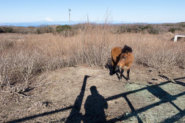 三原山 馬