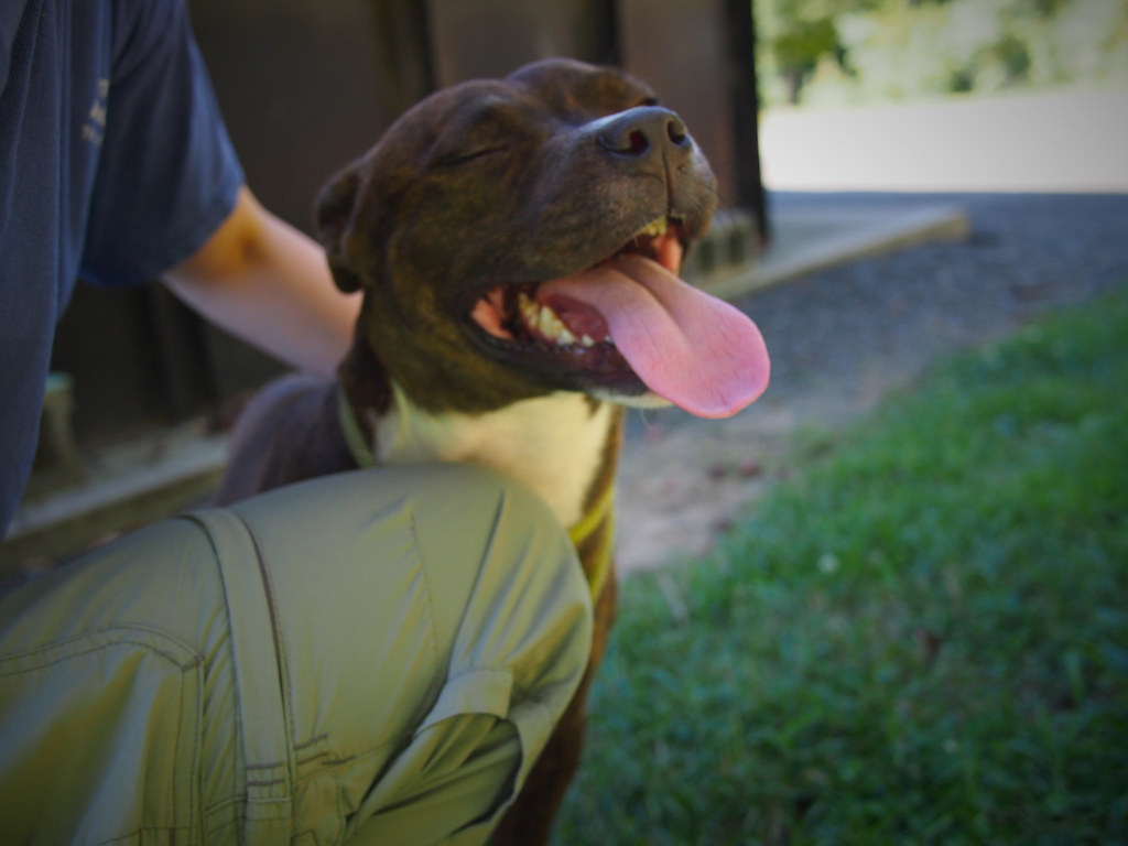 Image Result For Dog Training Methods