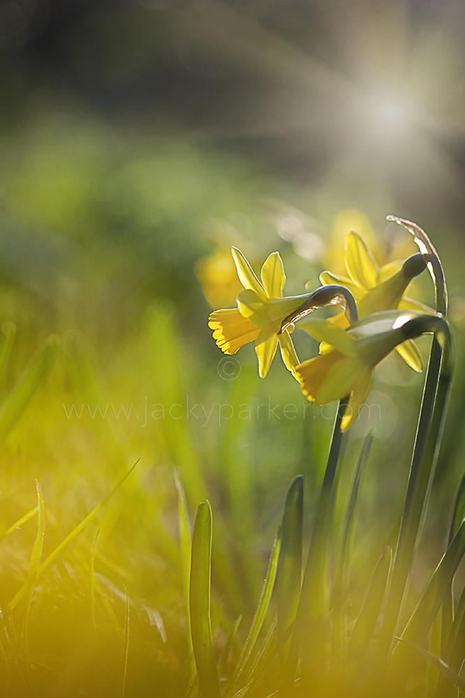Spring Sunshine | Jacky Parker | Flickr