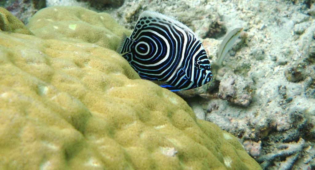 Raja Ampat Scuba Diving Guide  Bluewater Dive Travel