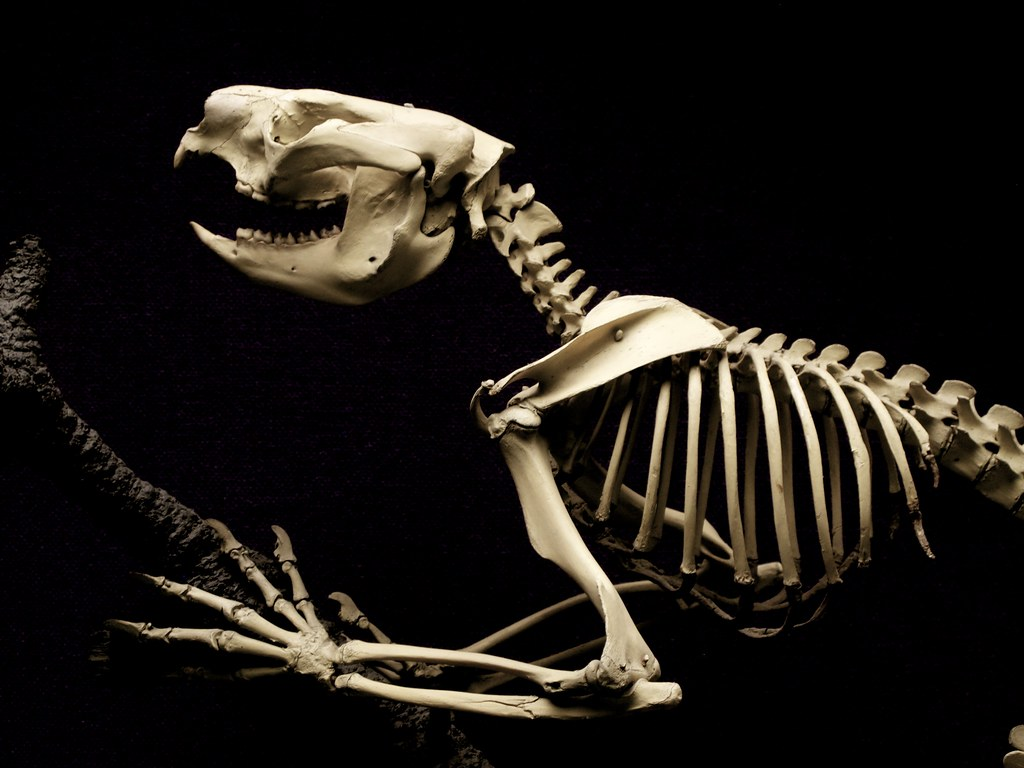 Possum @ Australian Museum's Skeleton Gallery | Ambra ...