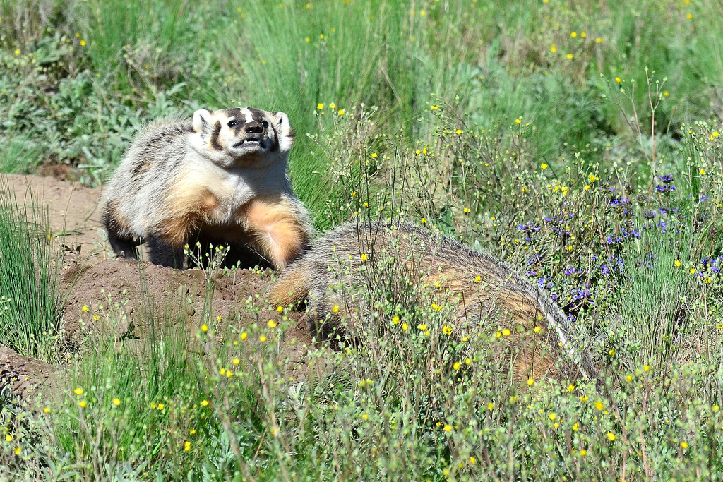 Badger Valles Caldera New Mexico Larry Lamsa Flickr