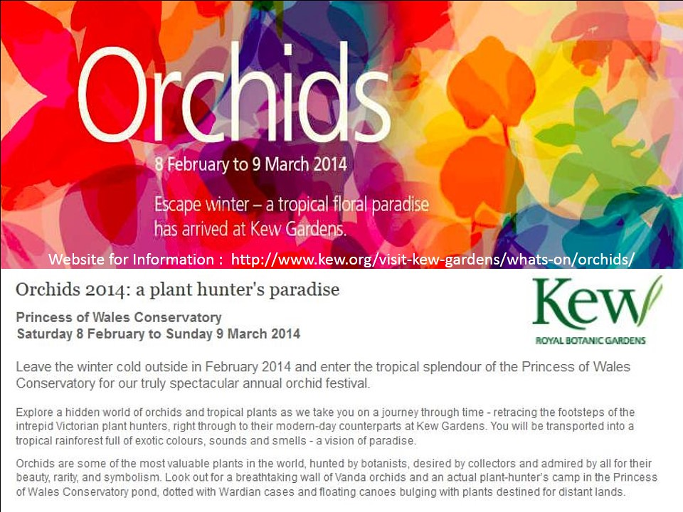 Kew Gardens Annual Orchids Festival 2014 From 8 February