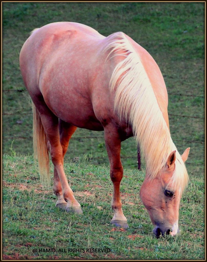 Rare Albino Horses A UNIQUE HORSE - IS TH...