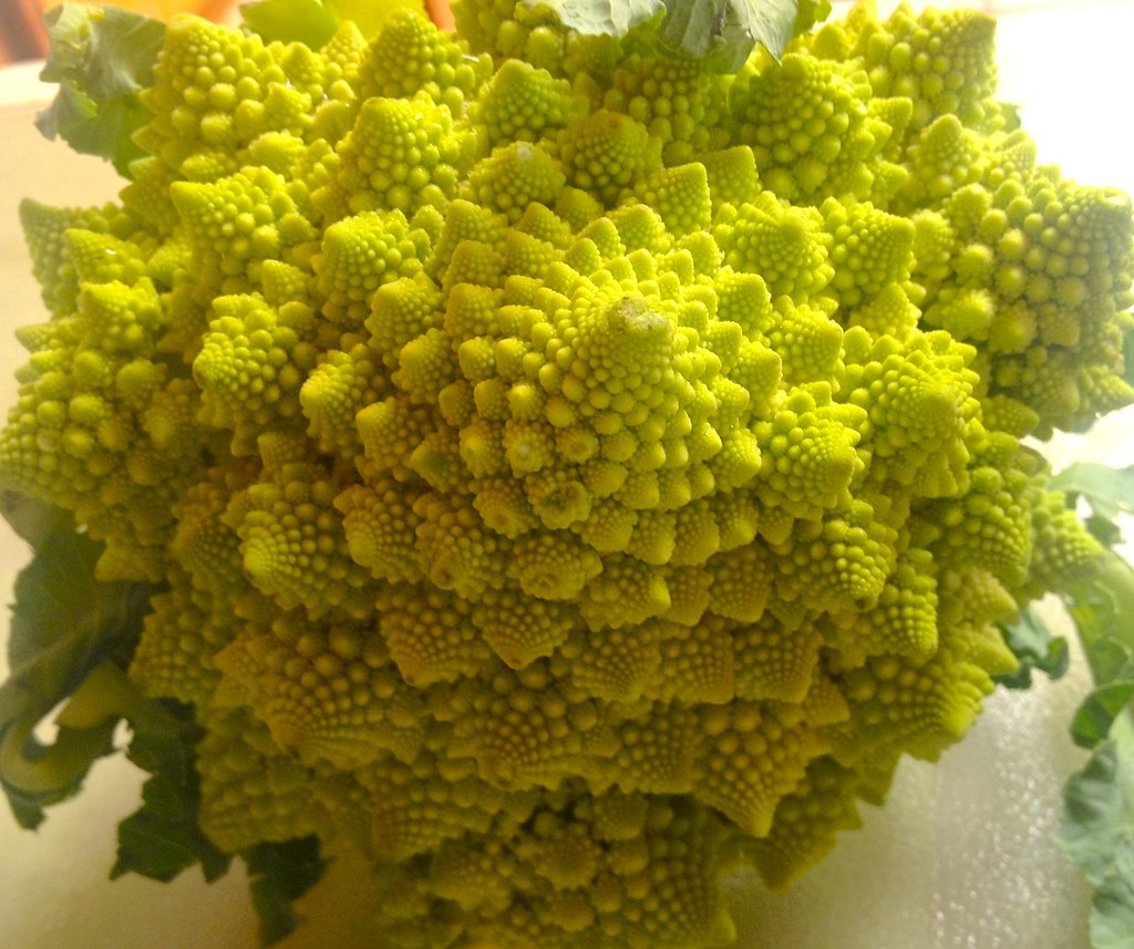 an overview of the characteristics of fractals in the world of mathematics Drastic changes have come in mathematics education at  for information about fractals and fibonacci numbers  the changing needs of a changing world have made .