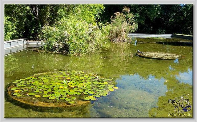 Jardines de Pedralbes. Barcelona (8)