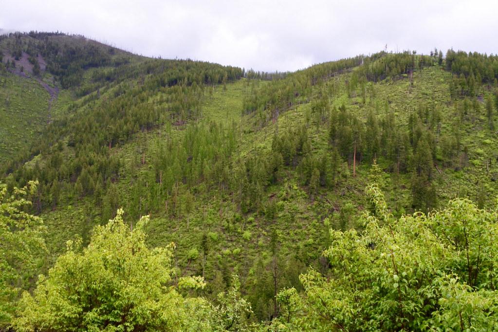 Siegel Creek