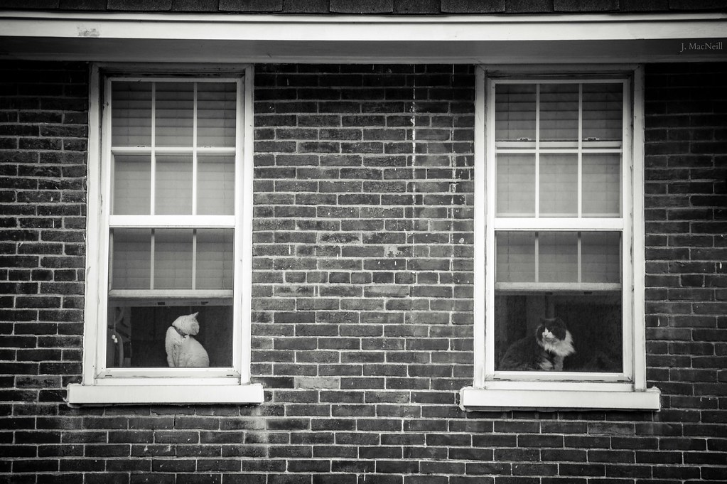 cat windows