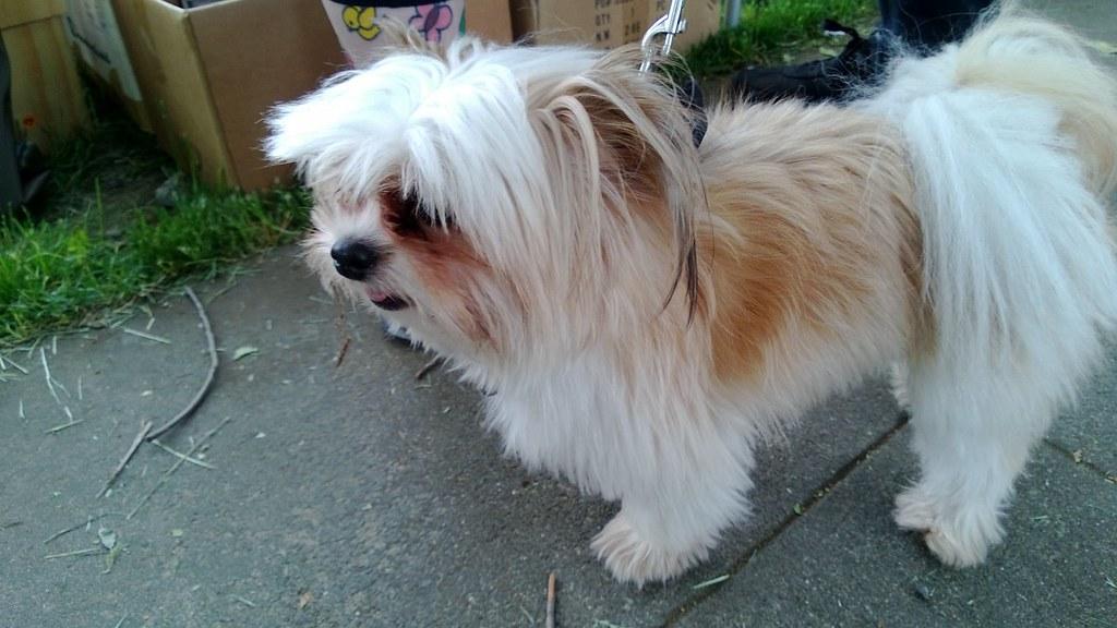 Dash Dog Little Dog Named Dash | Flickr