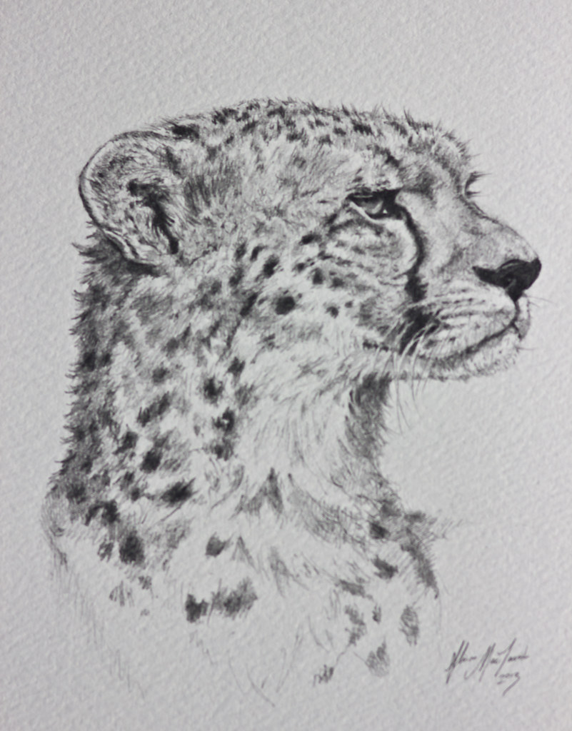 Cheetah Pencil Drawing Dad S Father S Day Gift Cheetahs