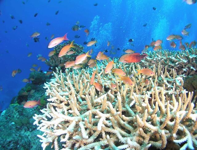 健康的珊瑚礁生態系。圖為綠島石朗海域。陳昭倫提供。