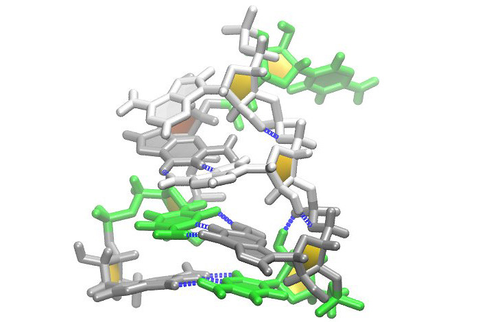 "An example of RNA folded into a tetraloop, in this case the ""Z-form duplex"" under study that could provide medical treatment opportunities for retroviral diseases such as Zika and Ebola. RNA nucleobases are colored using this key (Gray: Guanosine, Green: Cytosine, White: Adenosine). Hydrogen bonds are shown in blue. The sequence is gcGCAAgc (capitals indicate residues forming the loop)."