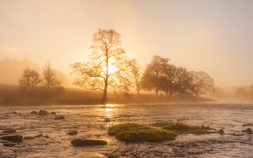 Chatsworth Mist
