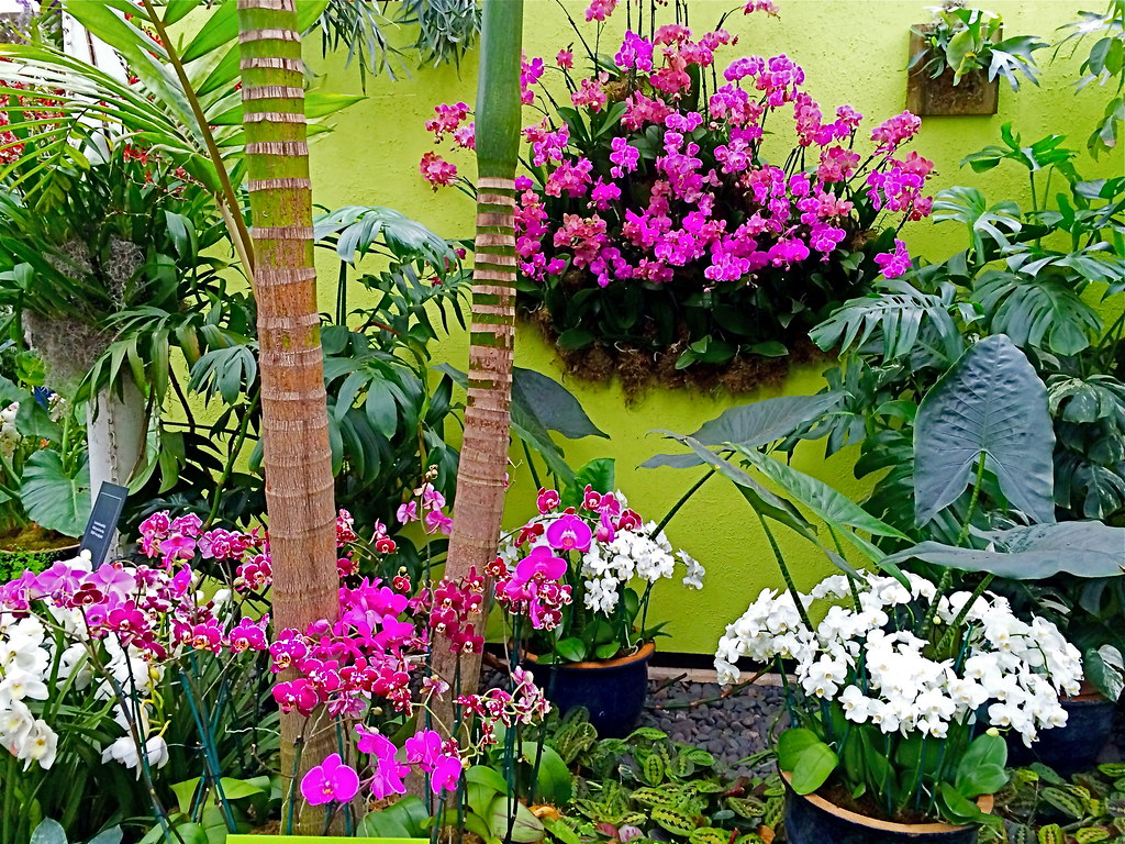 New York Botanical Garden 39 S Orchid Show 2014 Key West Cont