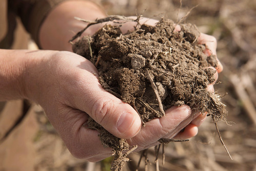 A person holding soil in hands