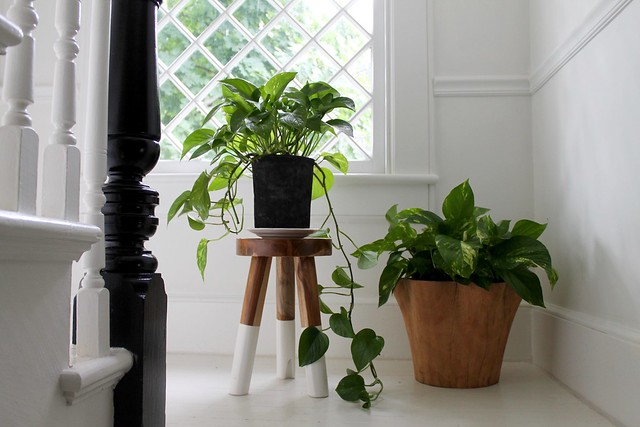 Choosing Houseplants