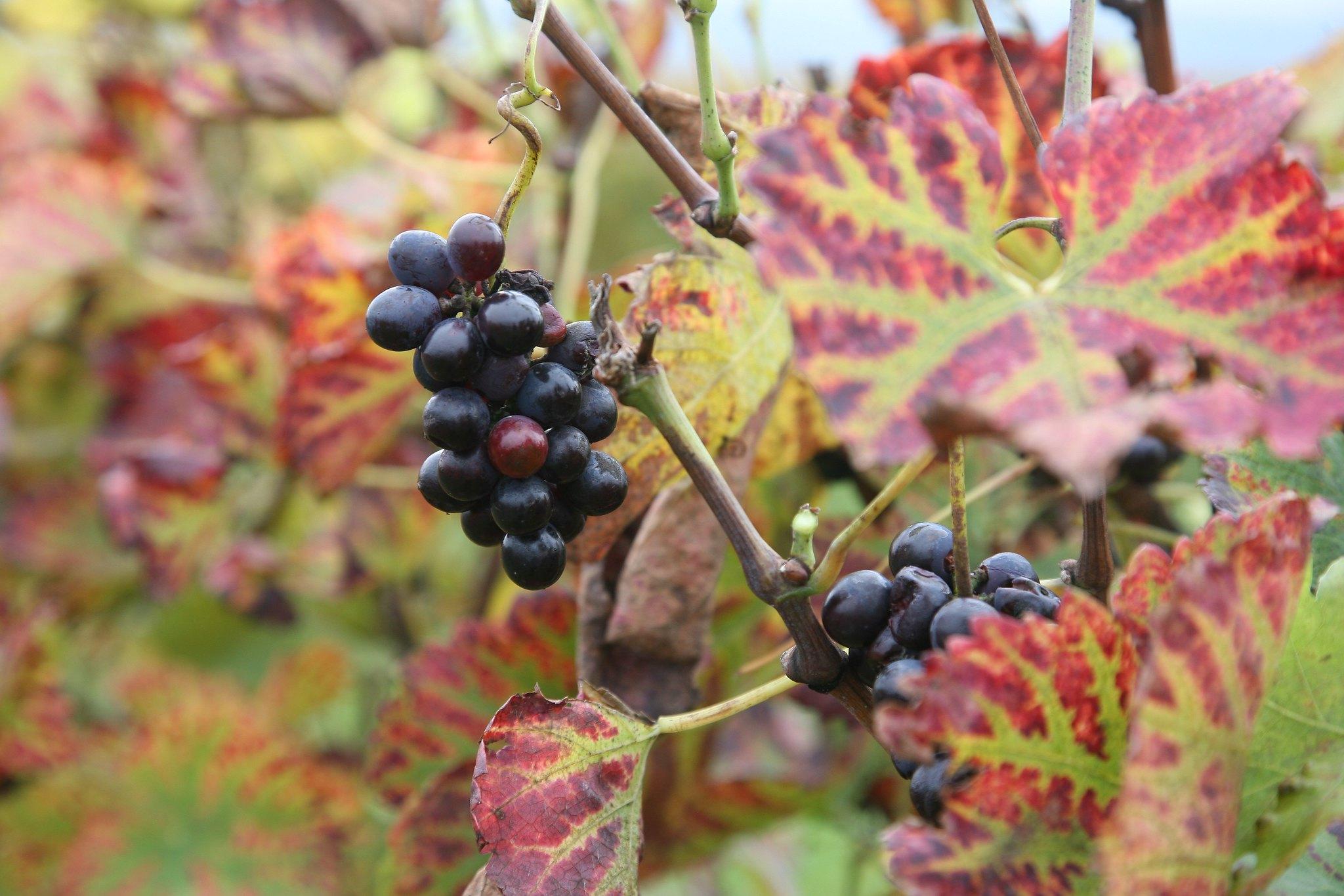 Vignes Drôme des Collines