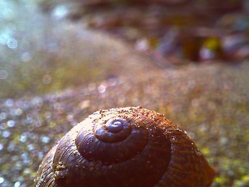 041/365 • snail shell