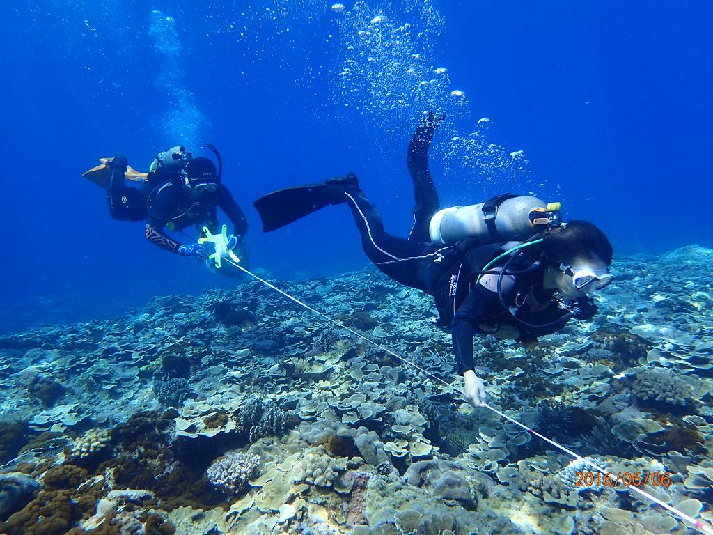 綠島大白沙珊瑚覆蓋率高且結構完整---蕭伊真攝