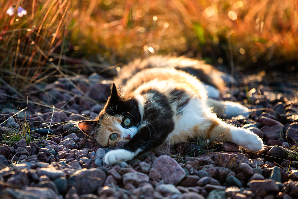 White Cat Tumblr Photography