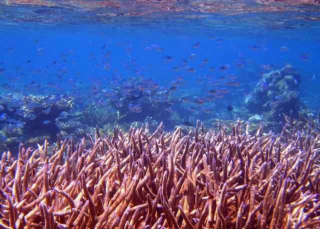 Impresionantes corales de color rojo bajo las cristalinas aguas de Maldivas durante nuestra excursión a la isla desierta