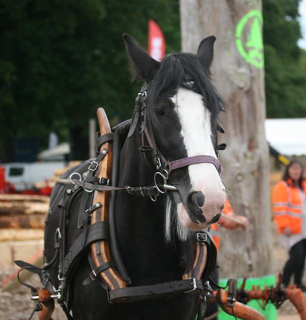 Logging Horse