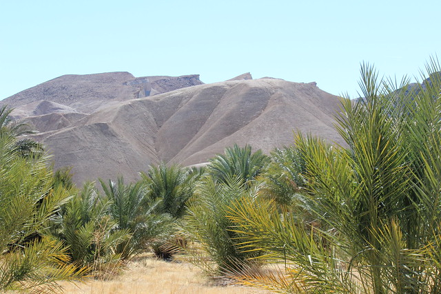 China Ranch Date Farm Death Valley Side Trip