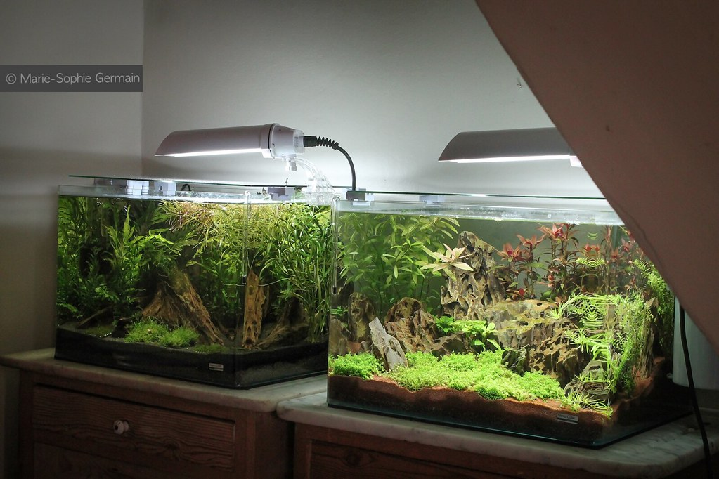 My 2 Aquariums Dennerle Scaper S Tank Copyright Marie So Flickr