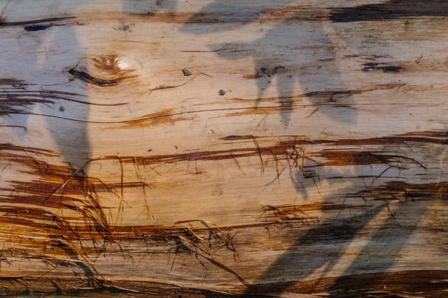 leaf shadows on log